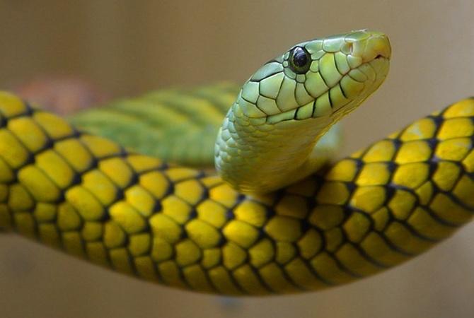 Ульяна Супрун объяснила, что делать, если укусила змея [фото]