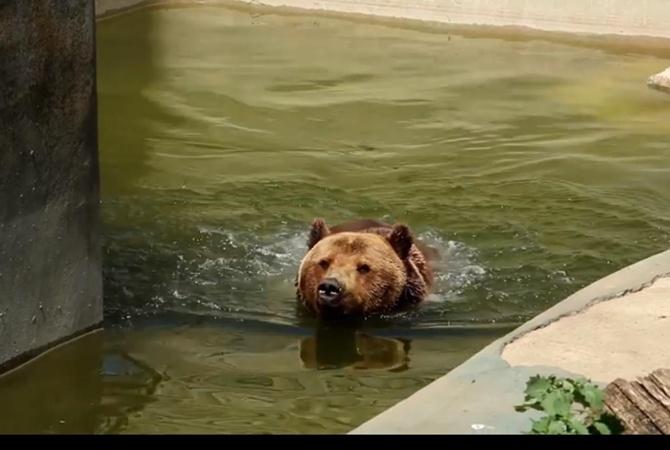 В Харьковском зоопарке показали, как спасают животных от жары [видео]