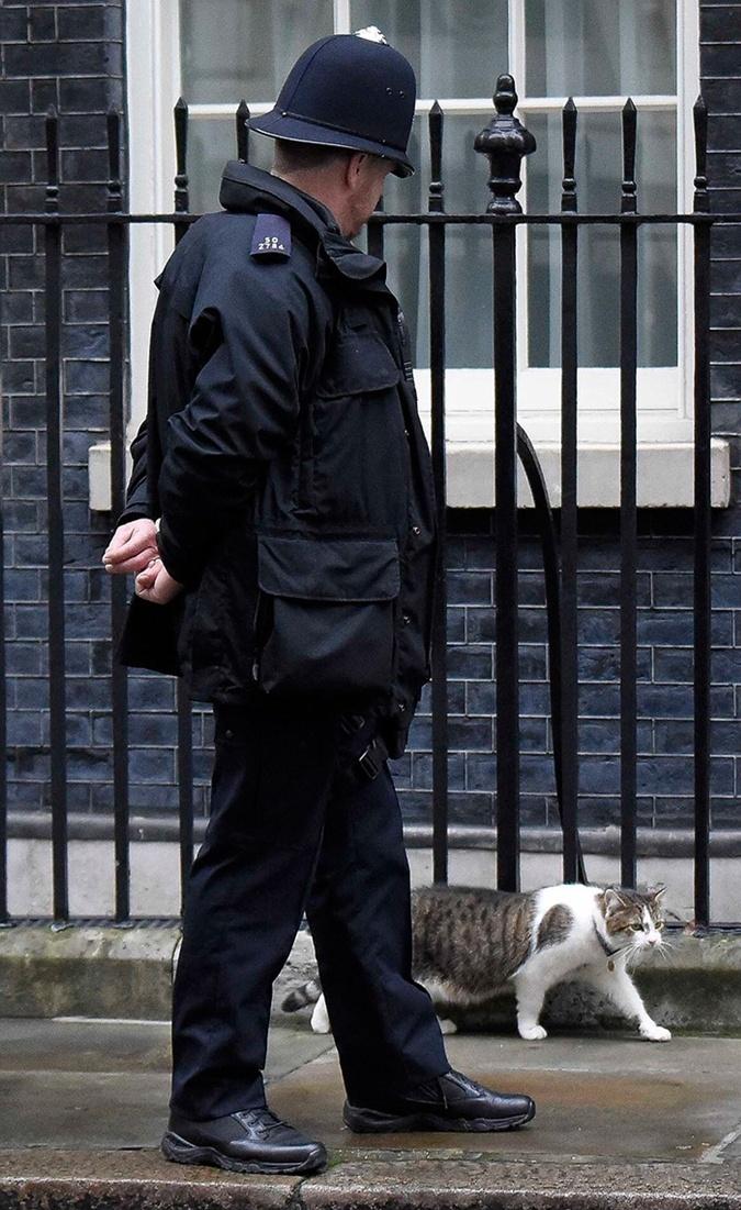 Коту Ларри придется потесниться: Борис Джонсон хочет завести на Даунинг-стрит собаку [фото]
