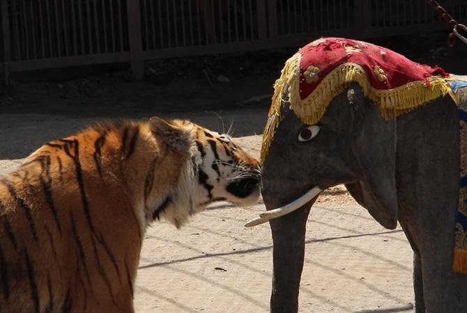 В Харькове тигр разодрал слона