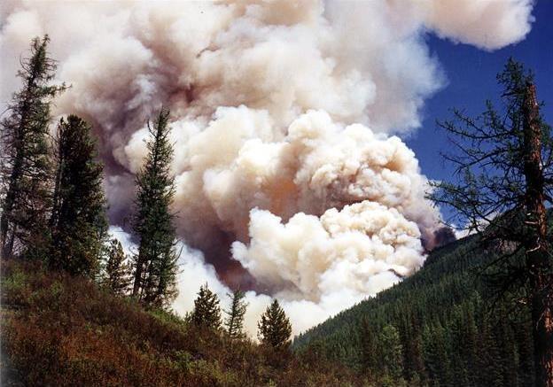 Лесные пожары в России грозят глобальной экологической катастрофой