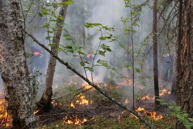 Пожары в Сибири: в Greenpeace бьют тревогу из-за увеличившихся масштабов катастрофы  [фото]