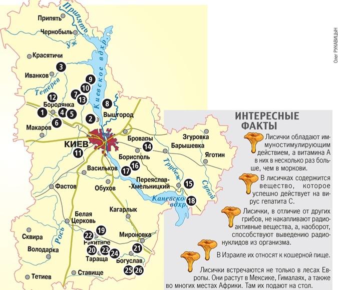 Лучшие грибные места Украины