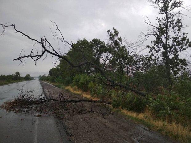 Непогода не прекращает трясти Украину: мощные ветры и ливни пришли в Николаевщину – фото и видео