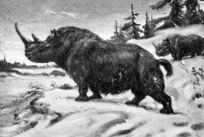 В село под Винницей приглашают археологов изучать доисторического носорога