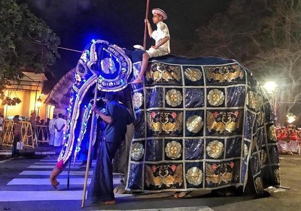 В Шри-Ланке слониху довели до истощения ради религиозных парадов [фото]