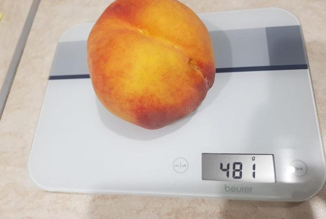 Запорожские садоводы вырастили персик-великан