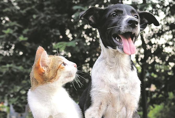Как подружить кота с собакой