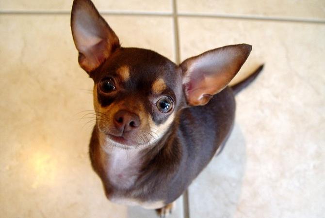 В Херсоне собака спасла жизнь хозяину, притащив на балкон хозяйку