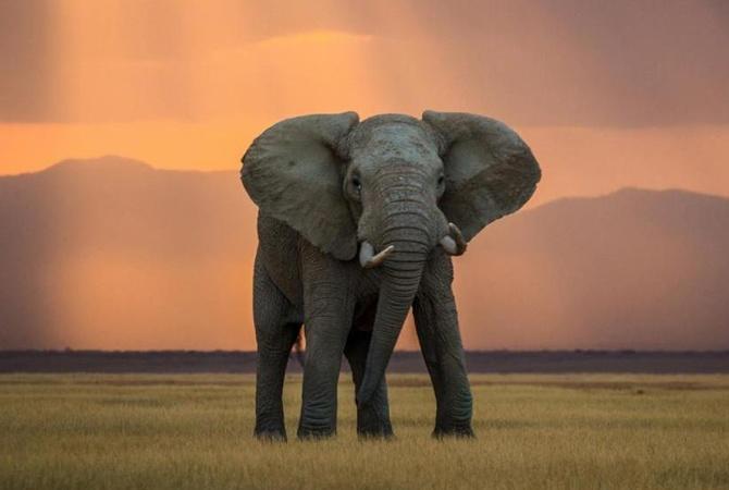 В Женеве запретили продажу африканских слонов циркам