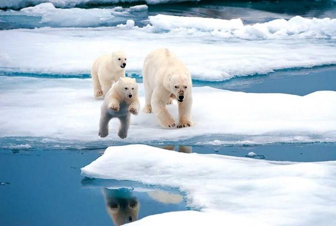 Температура в Арктике добралась до нового исторического рекорда