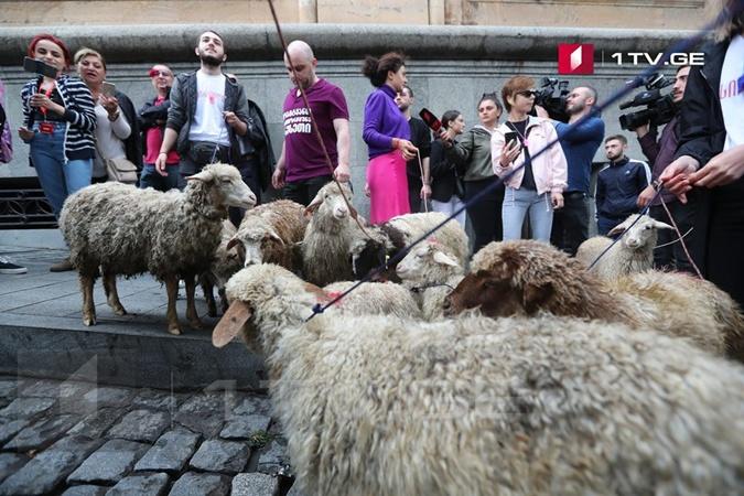 К парламенту Грузии согнали стадо овец, некоторые проникли в здание [фото,видео]