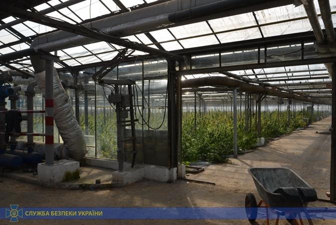 На Ивано-Франковщине СБУ изъяла марихуаны на сумму более 50 миллионов евро [фото]