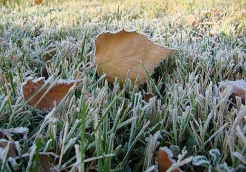 В Украину пришли заморозки, но днем будет солнечно [карта температур]
