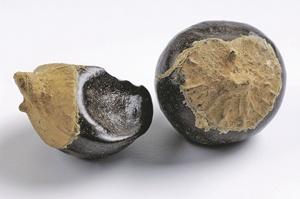 Насколько полезны чайный гриб, ягоды годжи и кордицепс