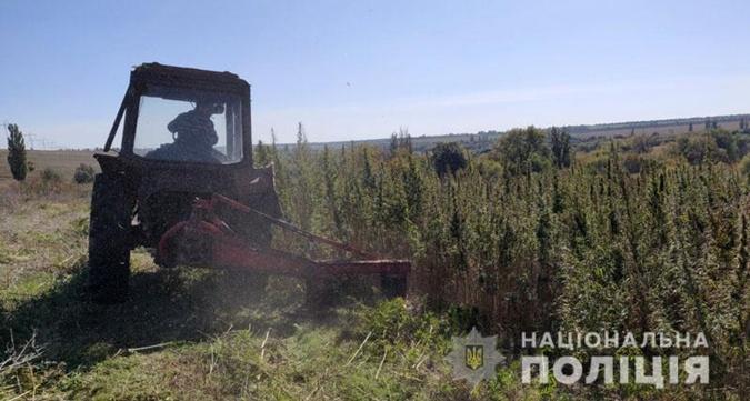 В Донецкой области сгорели более полумиллиона кустов конопли [фото]