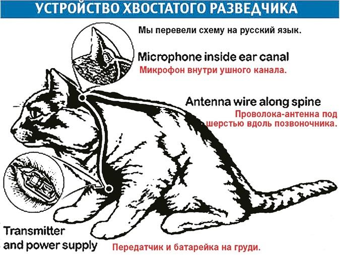 ЦРУ собиралось шпионить за Брежневым спомощью кота-суперагента