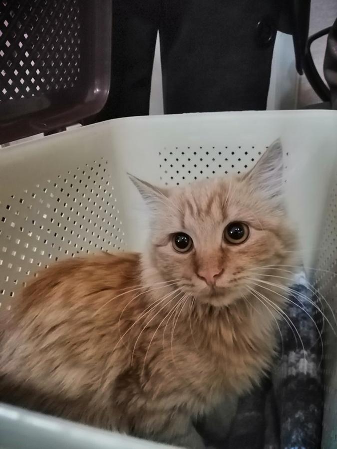 В Кременчуге ищут дом для кошки, которую спас дворовой кот